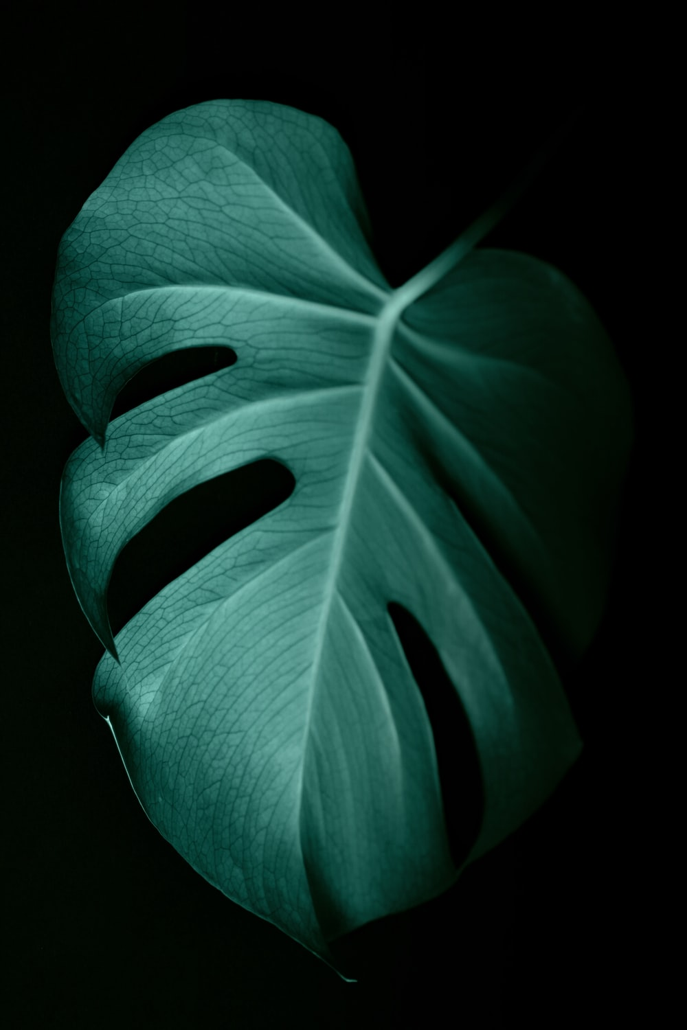 green leaf in dark surface