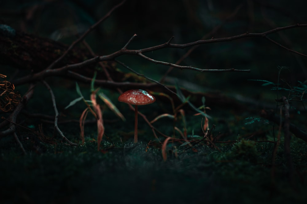 red mushroom beside grass