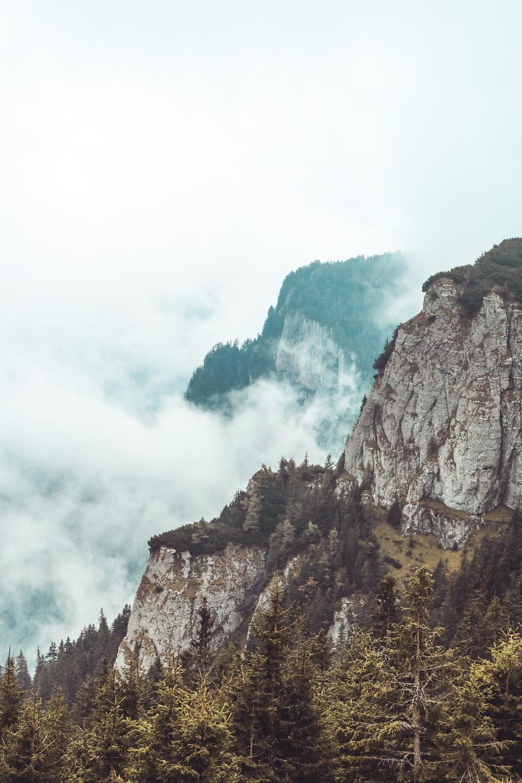 rocky mountain beside trees