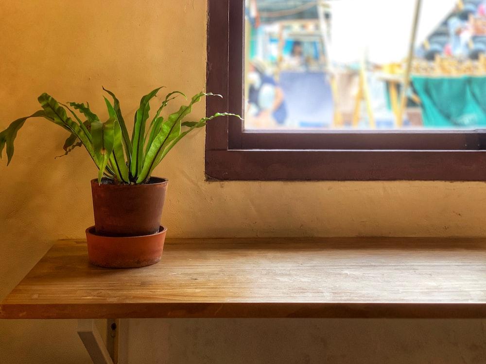 fern plan near glass window