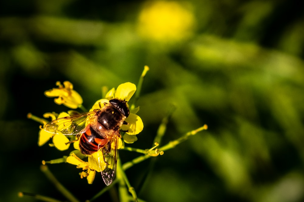 macro photography of brown and black wasp on yellow petaled flowers