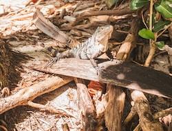 Manuel Antonio Nationalpark und Strände