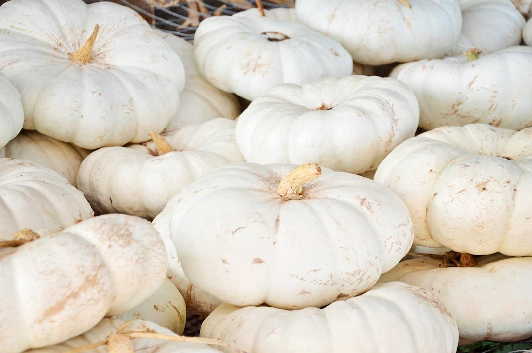 White pumpkins at the pumpkin patch. It's Autumn!