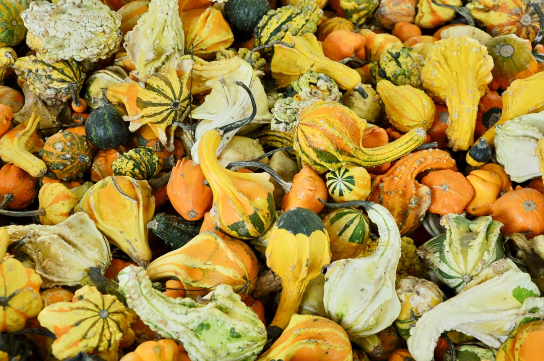 Fall pumpkins, squash and gourds at the pumpkin patch.