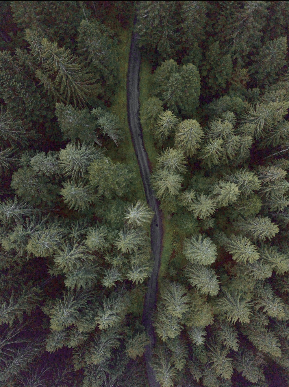 aerial photography of a road between trees