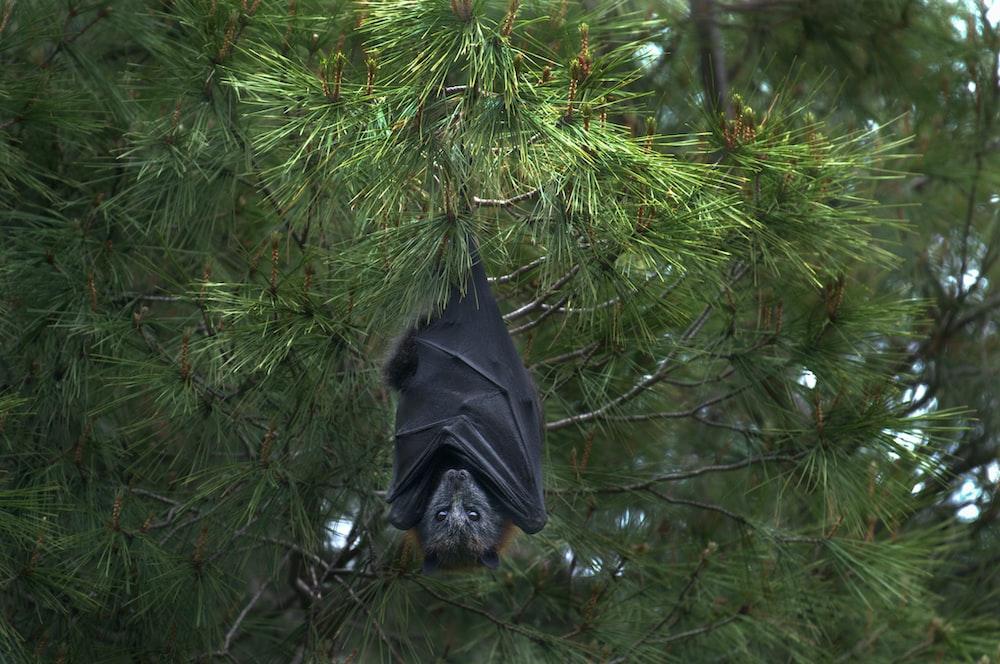 black bat under tree