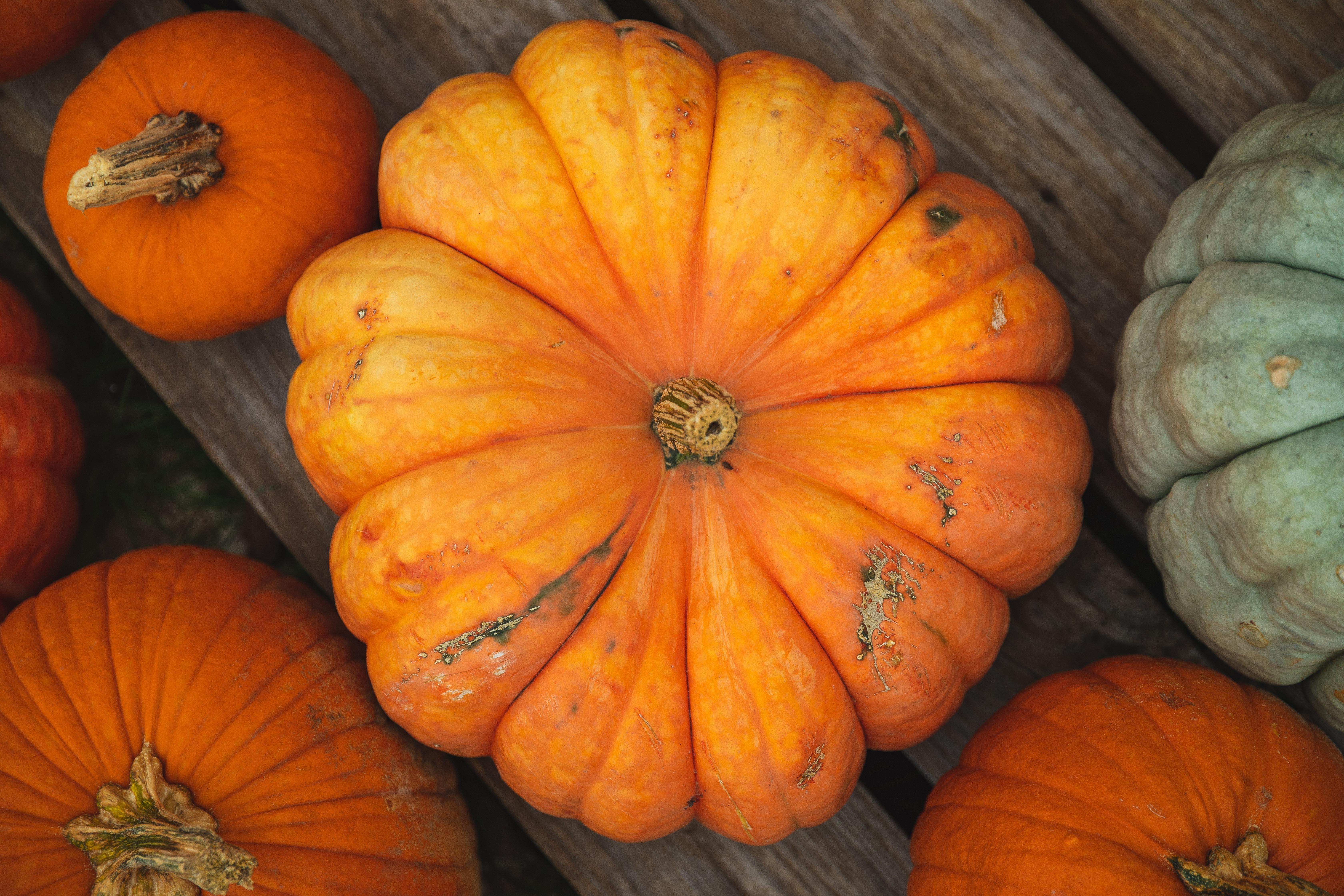 Pumpkins on a Pallet