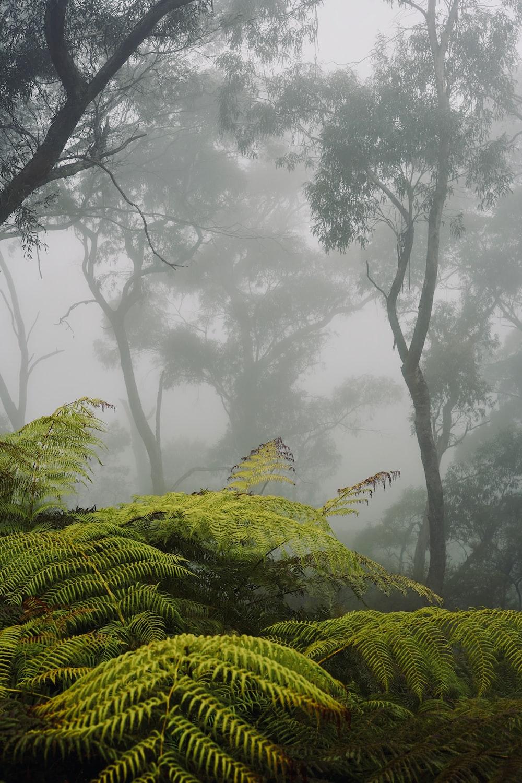 green ferns