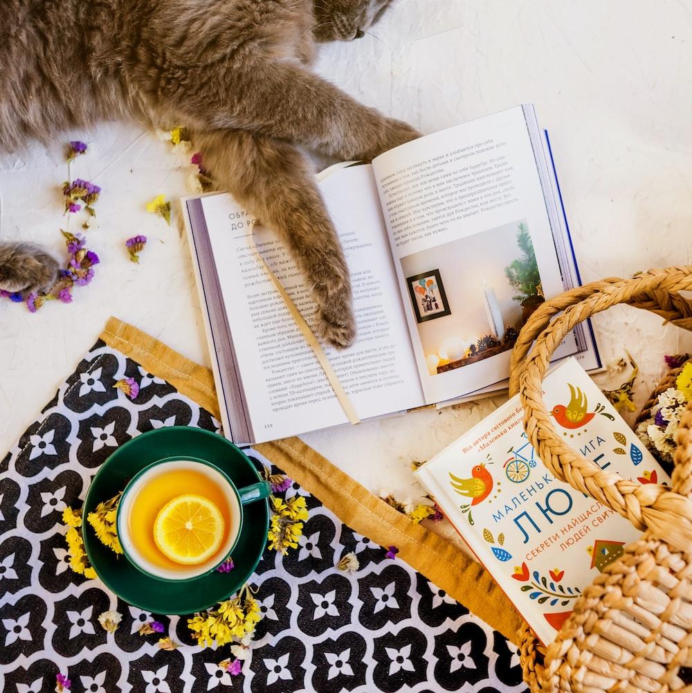 brown cat lying beside opened book