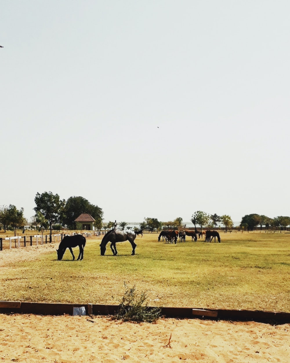 horses at the farm during daytime