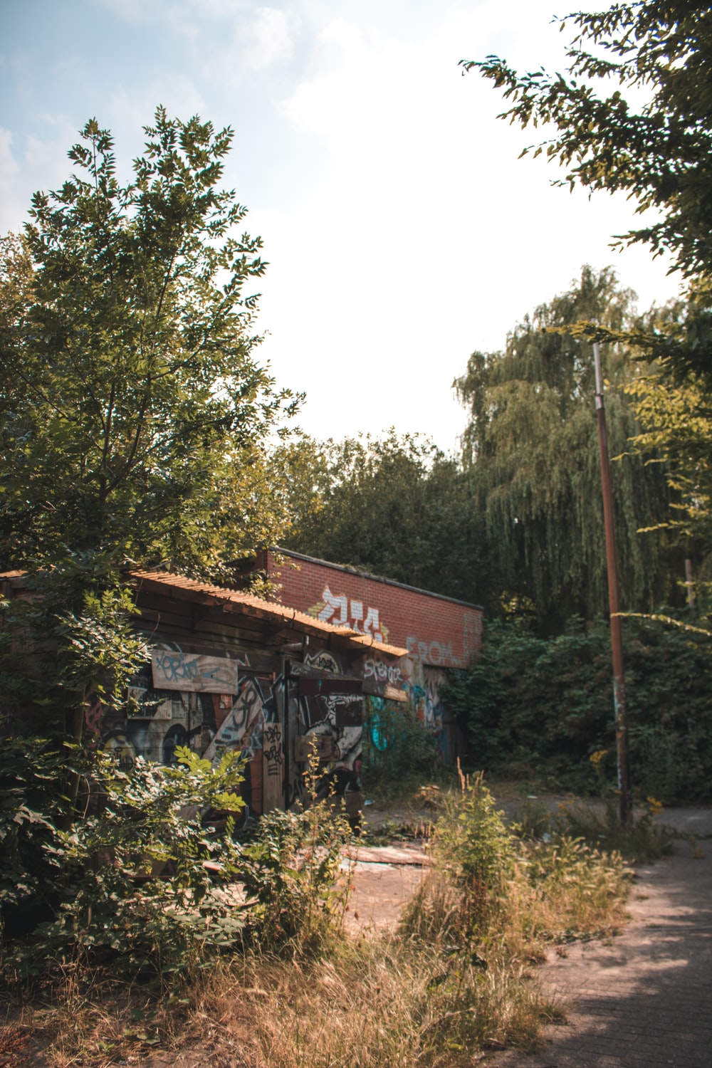 abandoned building near trees during day