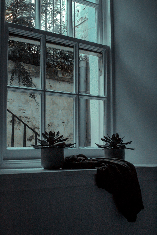 two succulents beside pane window