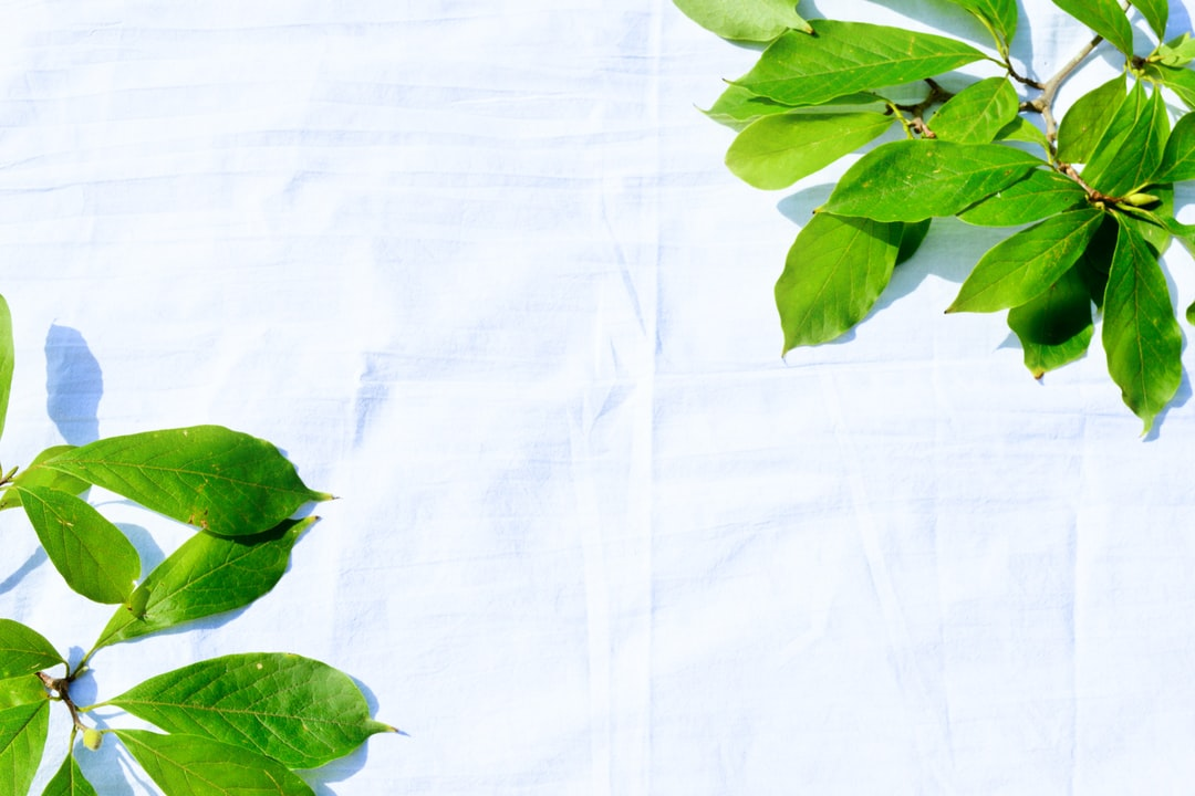 summer leaves against a white background
