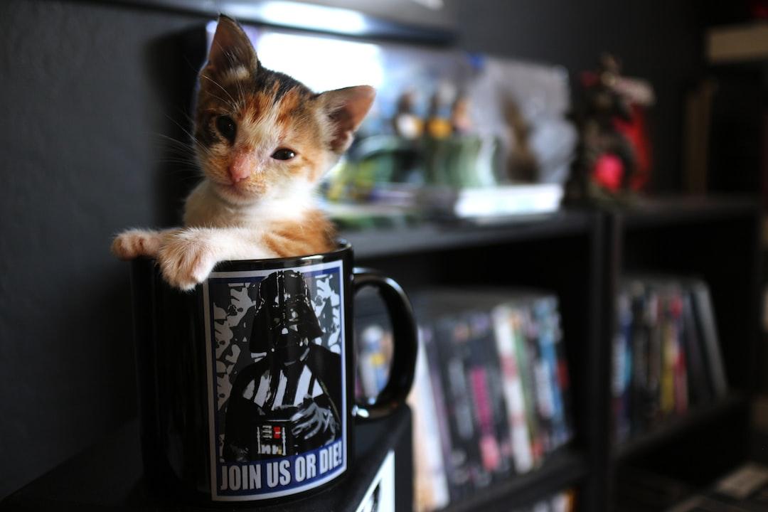 Kitten in Darth Vader Star Wars coffee cup