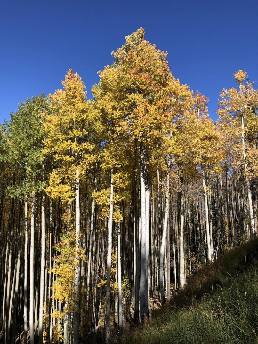 yellow trees on hill under blue sky