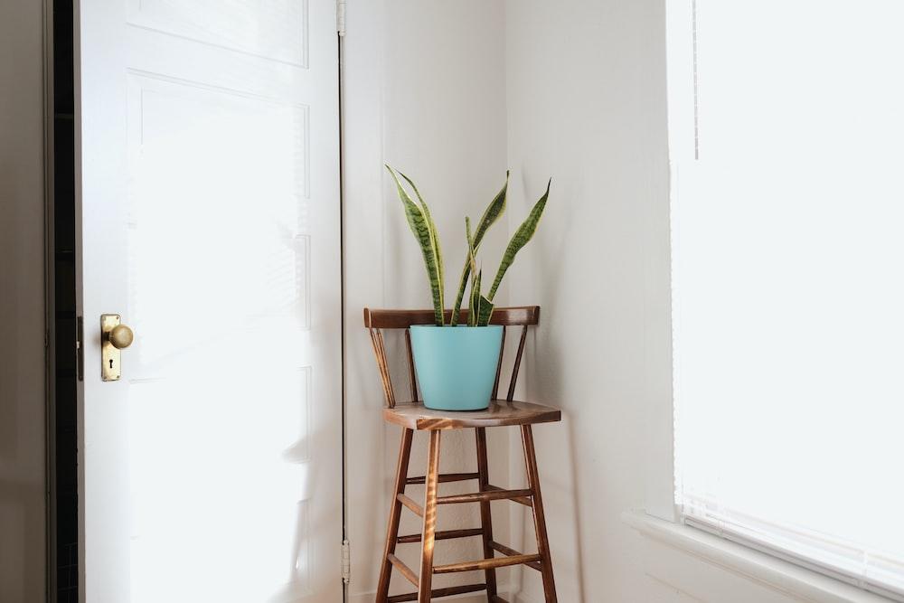 green leaf plant in pot beside slightly opened door