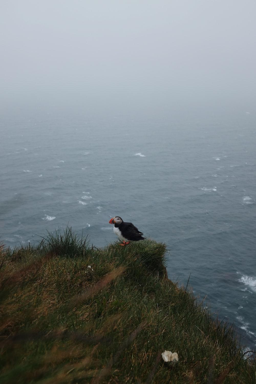 bird on ledge