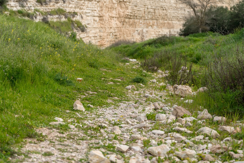 green grass near brown concrete wall
