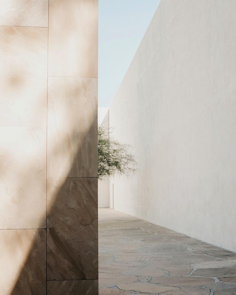 minimalist photography of a green tree along narrow pathway