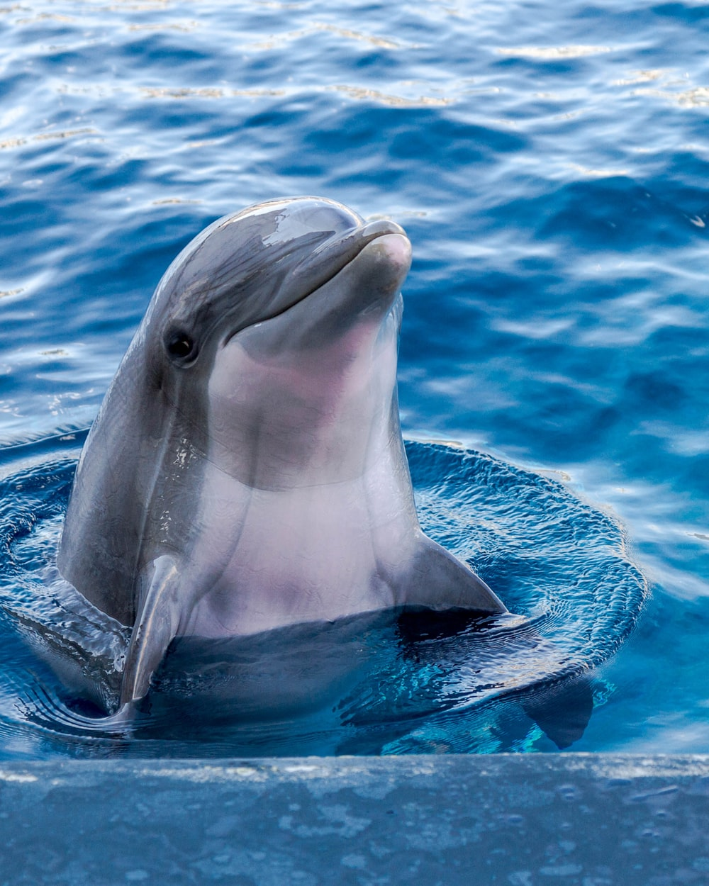 Dolphin Wallpapers Free Hd Download 500 Hq Unsplash