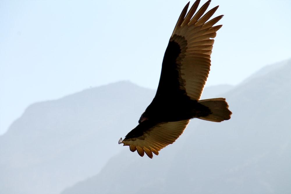 black and white bird on flight