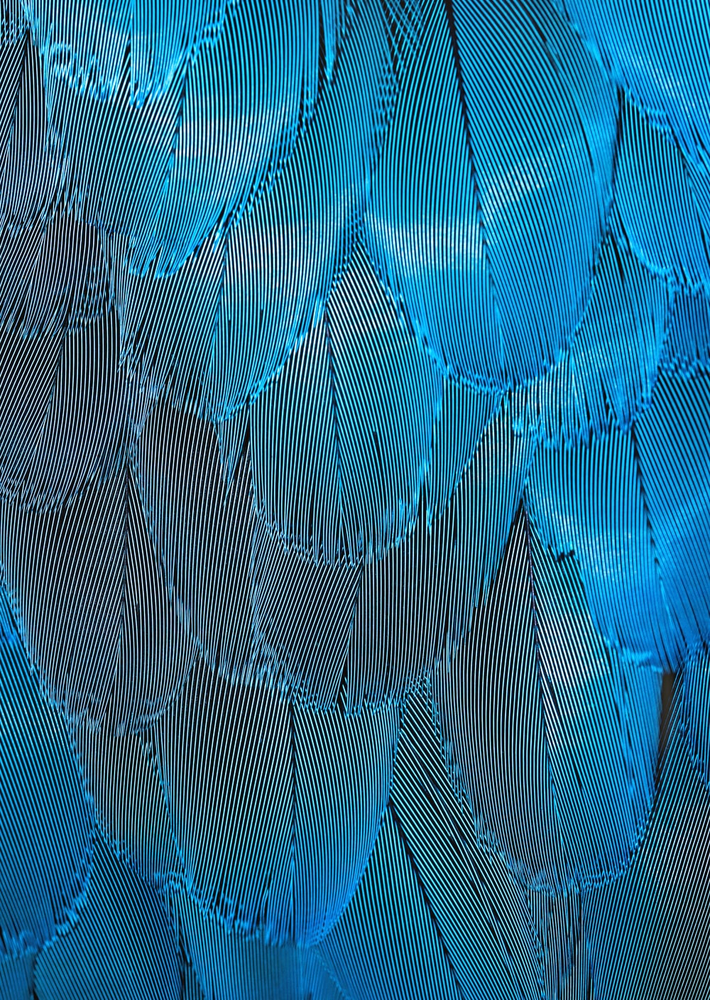 blue and brown feathers