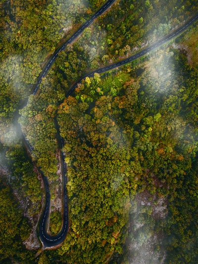 aerial photography of green-leafed trees during daytime