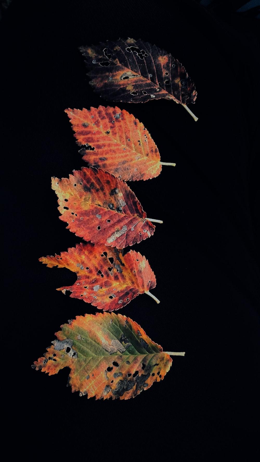 five brown and black leaves