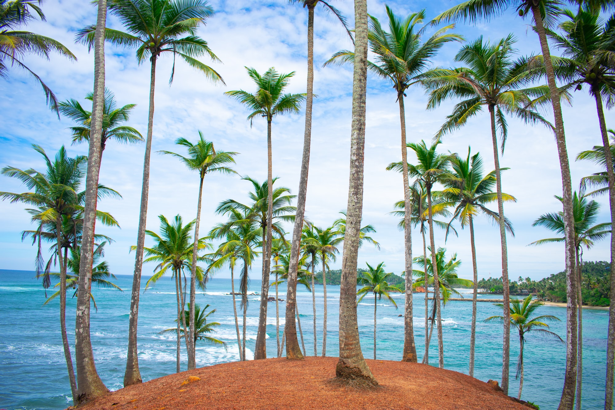 Tropical paradise at Coconut Tree Hill