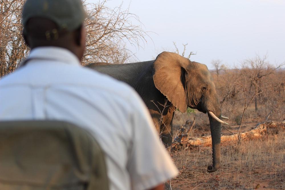 brown elephant facing sideways