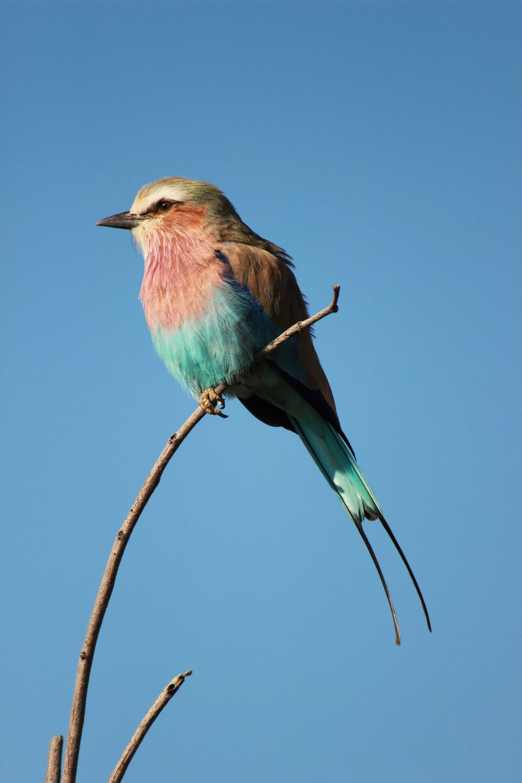 blue and brown bird facing sideways