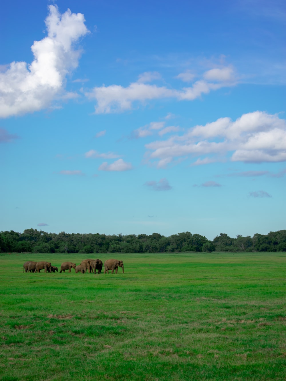 brown elephants on grass field during daytime