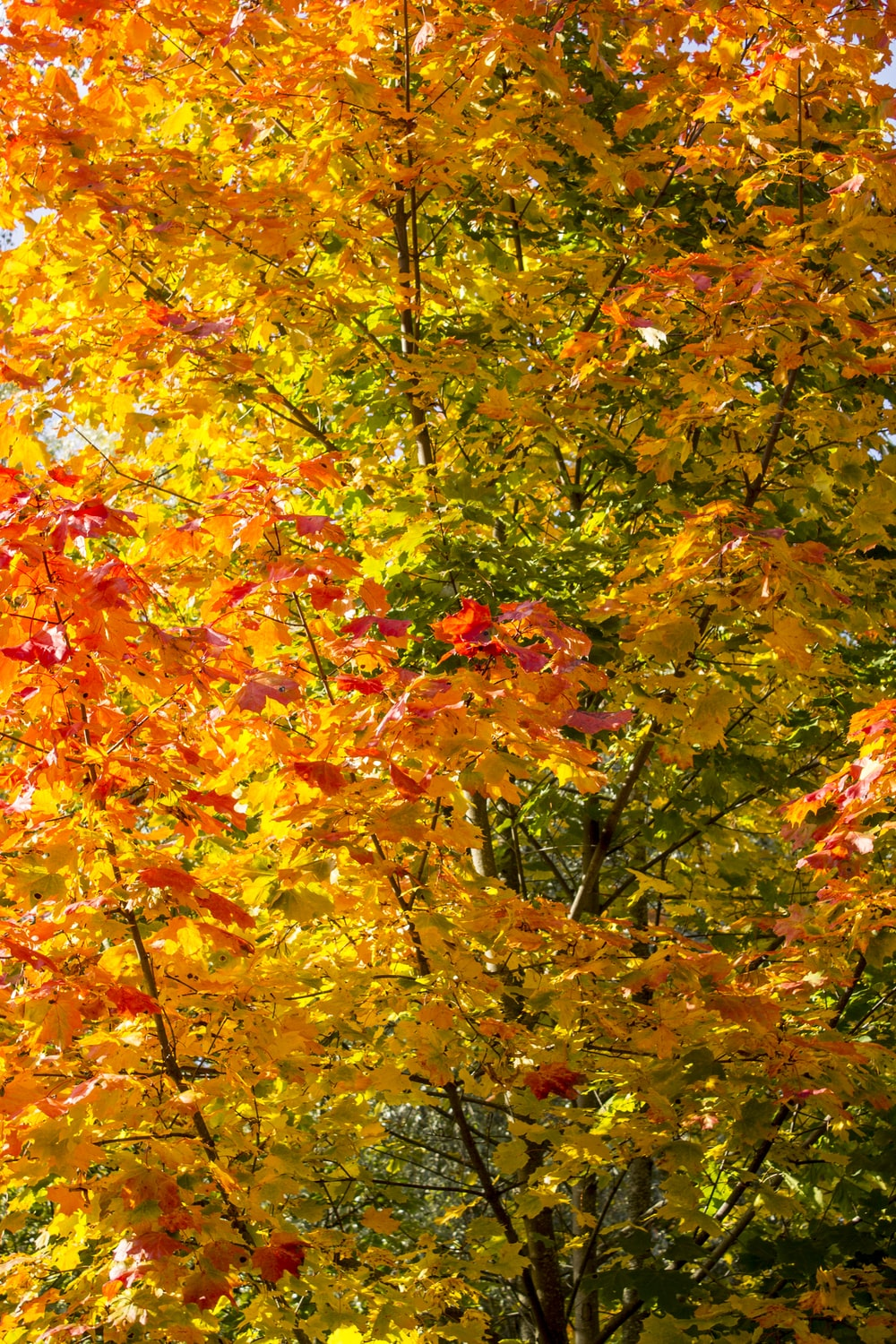 shallow focus photo of yellow and red trees