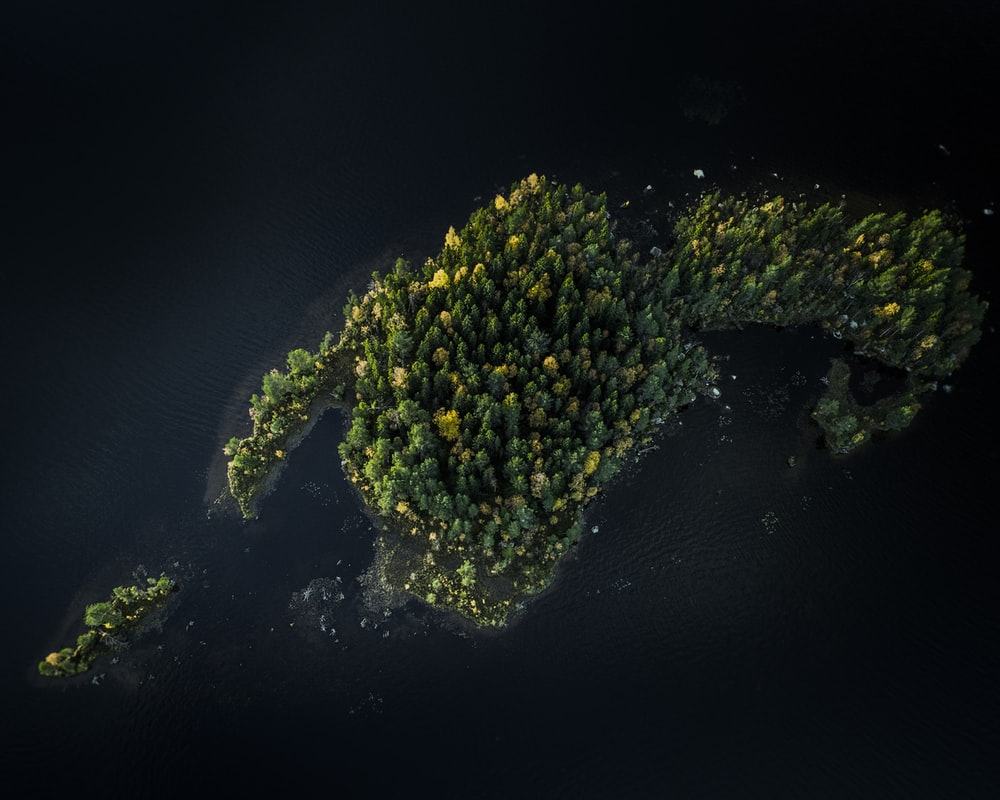 aerial photography of green-leaved trees
