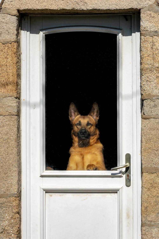 brown dog beside door