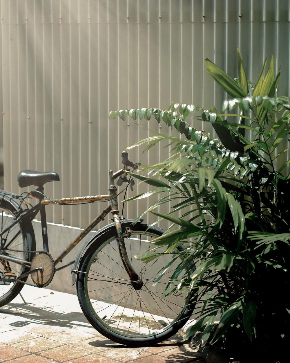 bicycle near plants