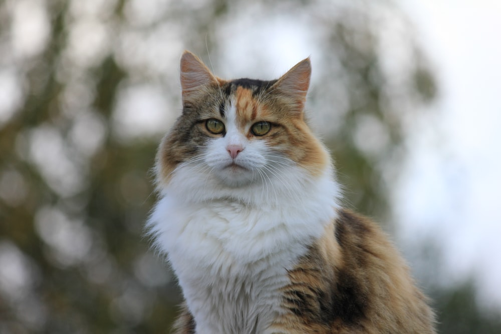calico cat sitting during day