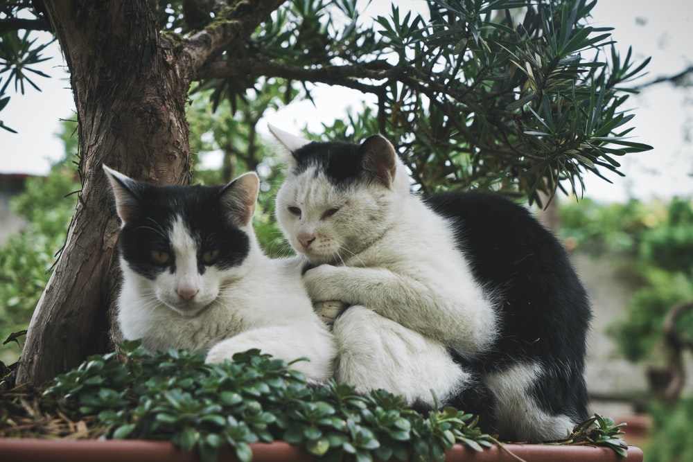 shallow focus photo of two white and black cats