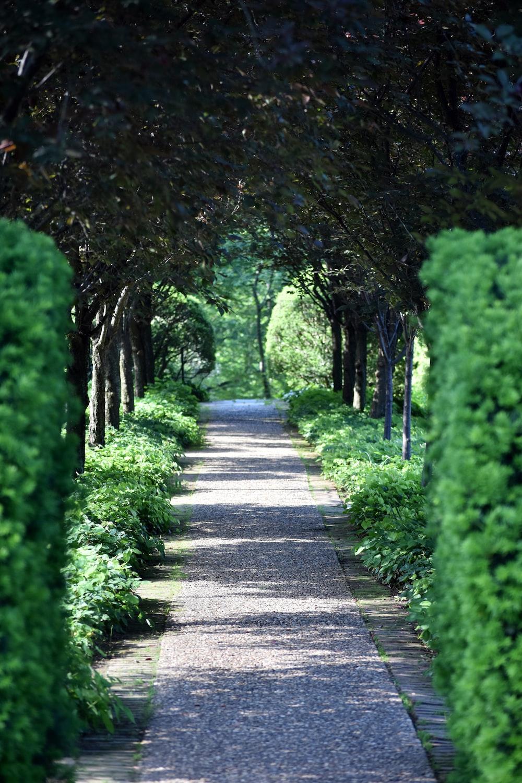 concrete pathway between green trees