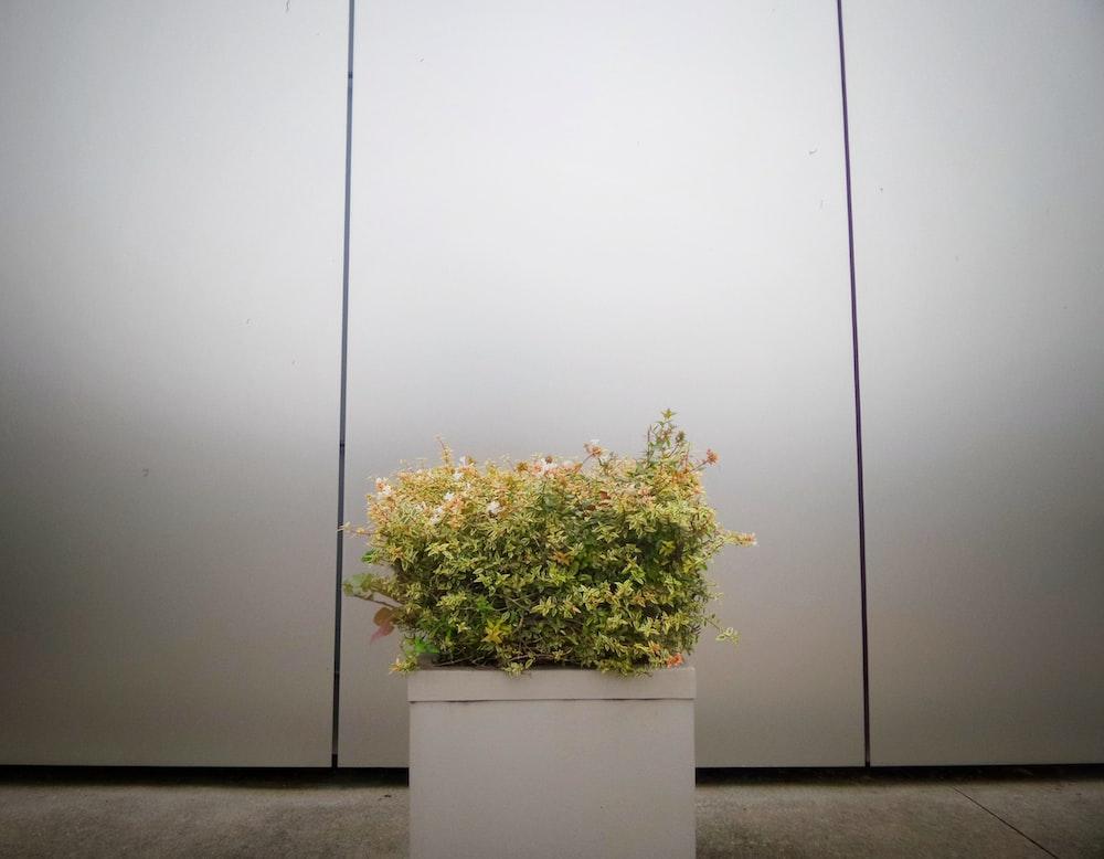 green leaf plants on white box