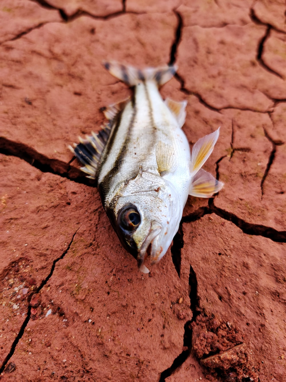 gray fish on brown soil