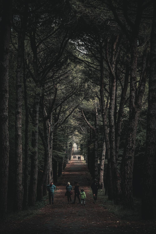 people walking on road under green trees