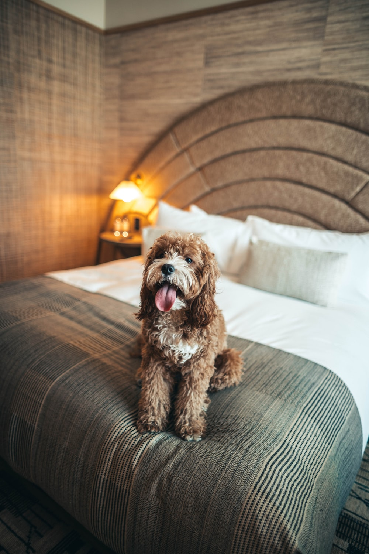 brown short-coated dog