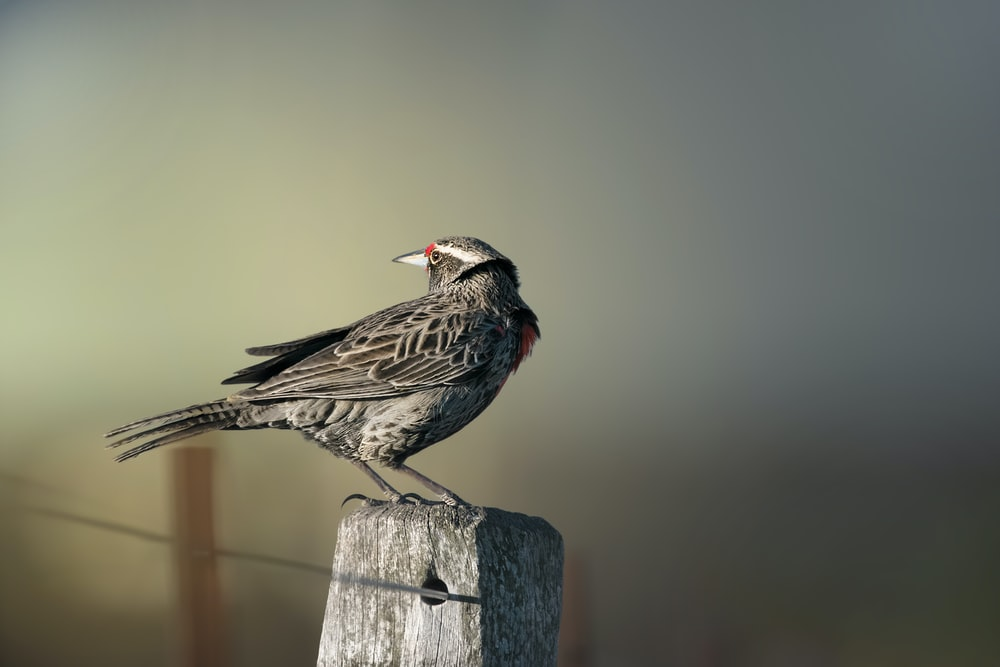 bird perched on gray stone