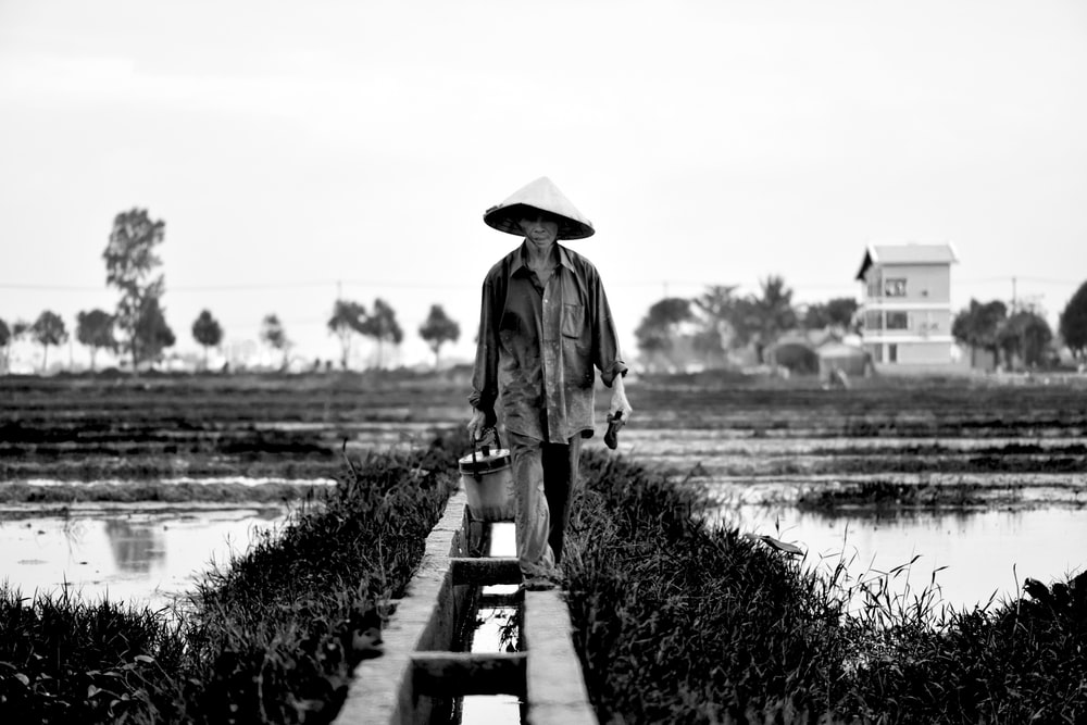 grayscale photography of man holding bucket while walking near rice field