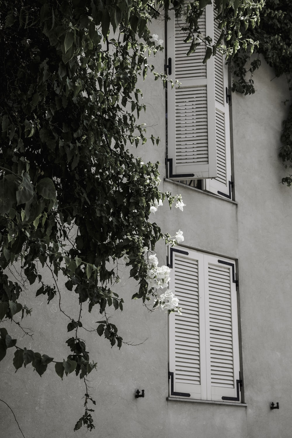 two white windows on building beside tree