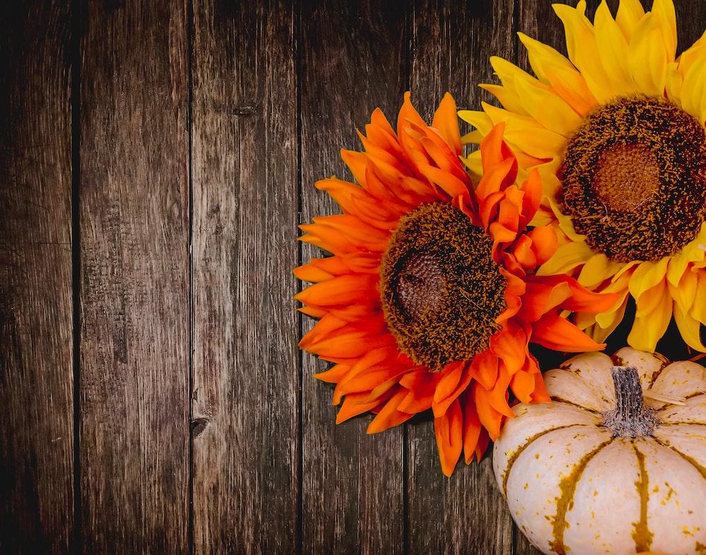 orange and yellow sunflower
