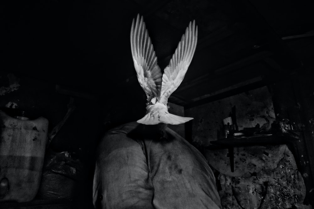grayscale photography of bird