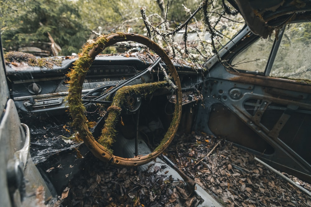 grass covered interior of a rusting car