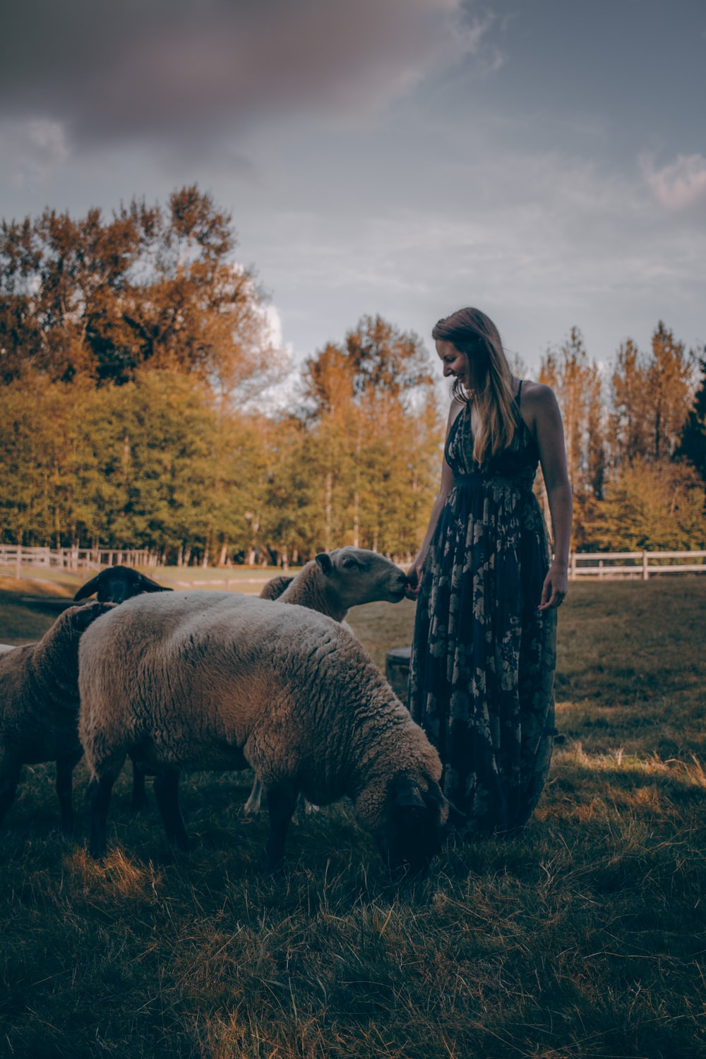 woman by sheeps